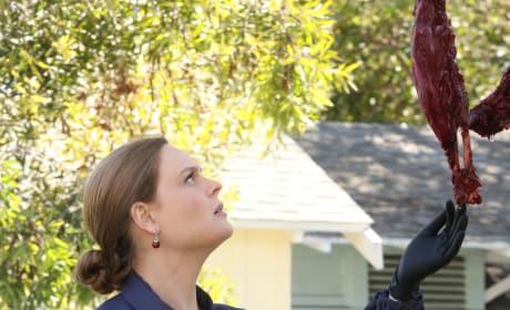 Brennan Examines Remains - Bones Season 10 Episode 22