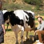 Mike and the Cow - The Last Man on Earth Season 2 Episode 17