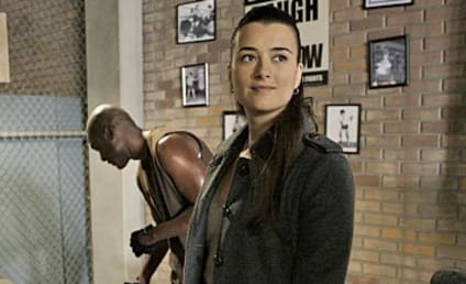Cote de Pablo: Returning to NCIS