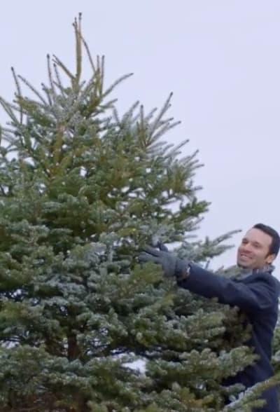 Picking a Tree - Mistletoe & Menorah