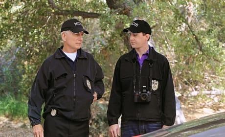 Tim, Gibbs