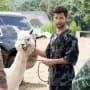 Alfie the Alpaca - Dynasty Season 2 Episode 4