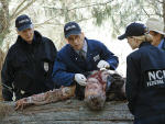 Cold Cases - NCIS