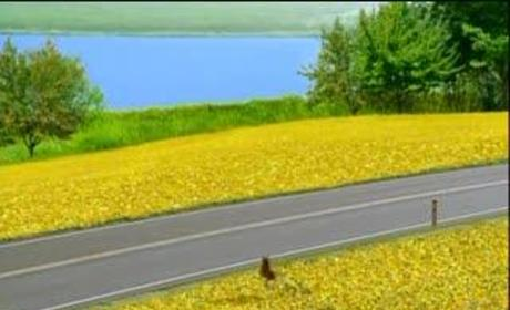 Pushing Daisies Opening