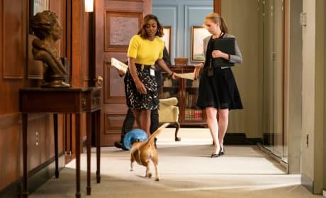 Taking Care of the Dog - Madam Secretary