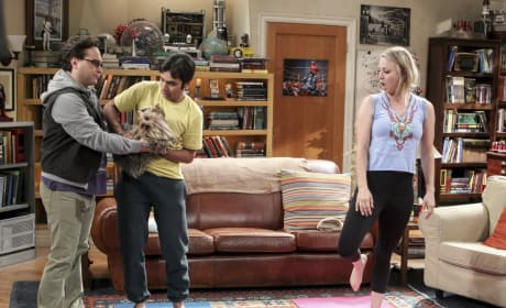 Yoga Dog - The Big Bang Theory Season 10 Episode 19