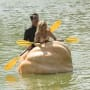 The Floating Pumpkin