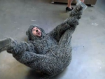 Break Dancing Wilfred