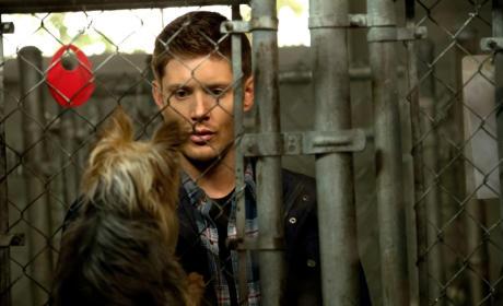 Eyes on a Canine