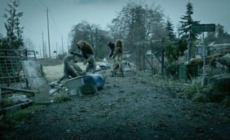 Pedro and Sampson Fight Valiantly - Zoo Season 3 Episode 1