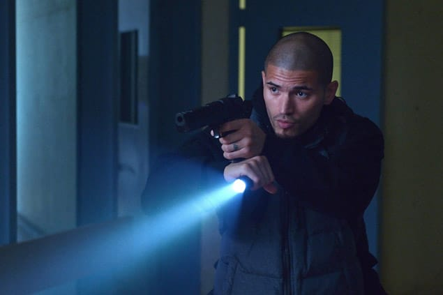 Gus on the hunt the strain