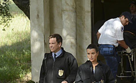 DiNozzo and David