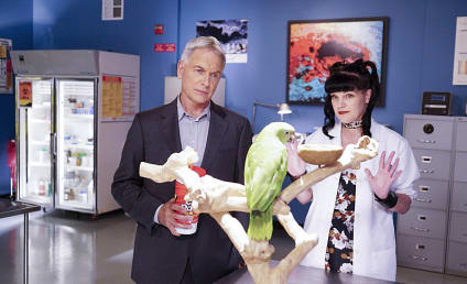 Watch NCIS Online: Season 14 Episode 3