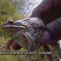 Poisonous Frog - Alone Season 5 Episode 4