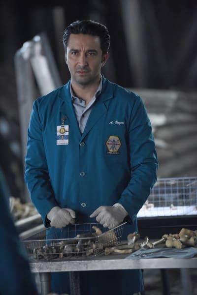 Arastoo Looks Over the Bones