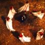 Watch Salem Online: Season 3 Episode 4