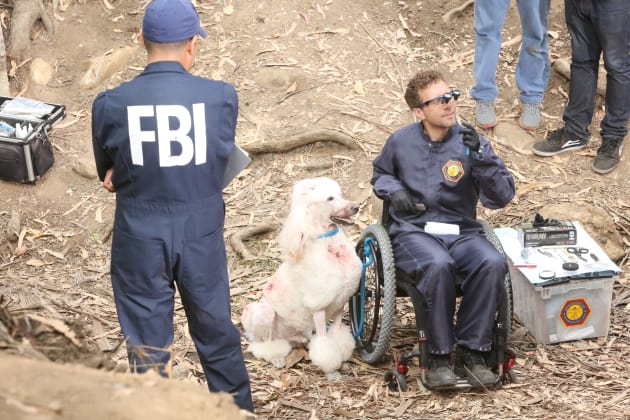 Hodgins and the Show Dog - Bones Season 12 Episode 3