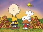 It's Thanksgiving, Chuck! - Charlie Brown Series
