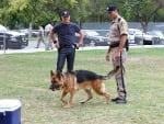 Nick Invetigates a Police Dog