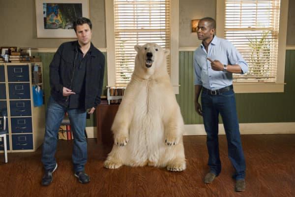 Innocent Bear!