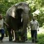 Elephant Runway - The Blacklist Season 5 Episode 3