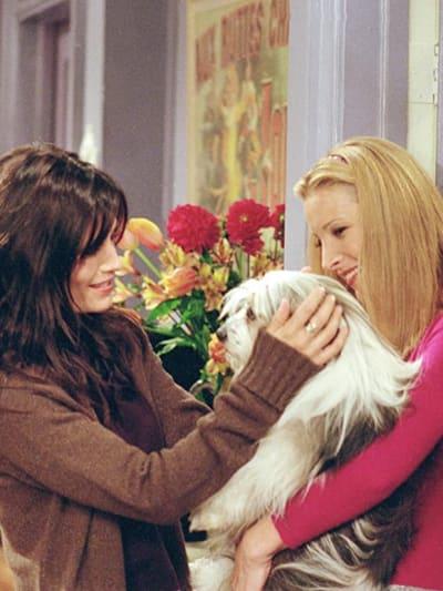 Dogs - Friends Season 7 Episode 8