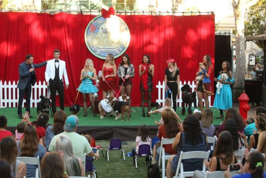 The Dog Show - The Bachelor