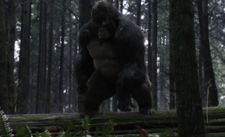 Grodd in the woods - The Flash Season 3 Episode 13