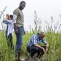 Finding Two Bodies - Queen Sugar Season 1 Episode 9