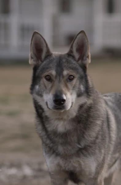 The Wolf - Absentia Season 3 Episode 6