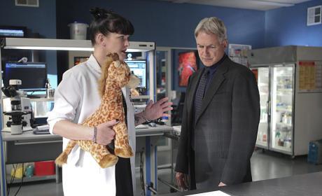 Abby Has a Giraffe - NCIS