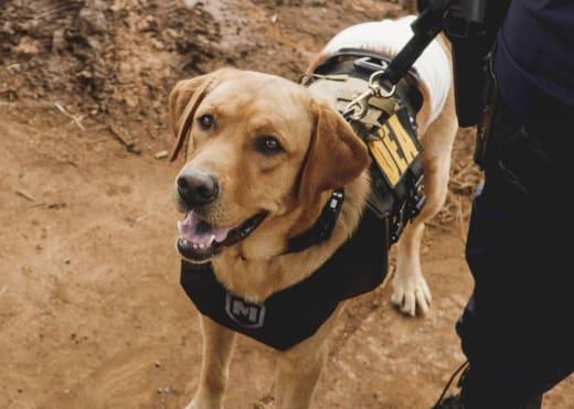 Police Dog - Hawaii Five-0