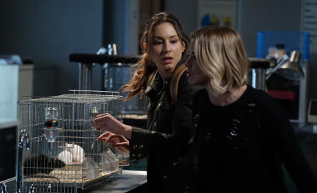 Let's Find The Truth - Pretty Little Liars Season 6 Episode 6