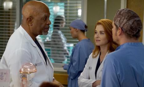 Witnesses - Grey's Anatomy