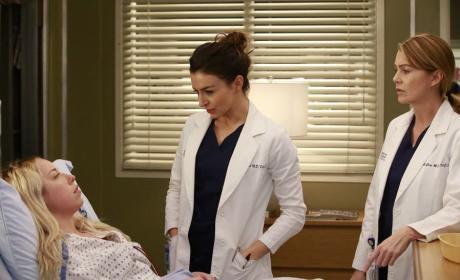 Amelia Takes the Case - Grey's Anatomy