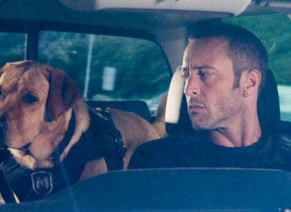 Watch Hawaii Five-0 Season 8 Episode 12 Online