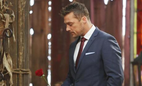One Final Rose - The Bachelor