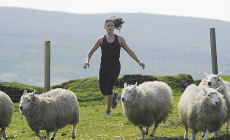 Corraling the Sheep - The Amazing Race