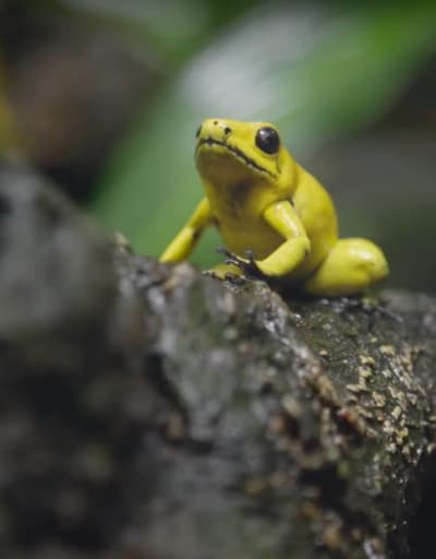 A New Turn of Events for Frogs