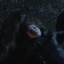 Cat is Dead - Gotham Season 3
