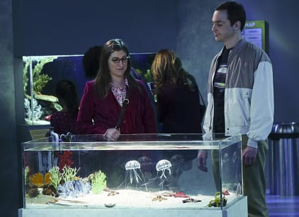 Watch The Big Bang Theory Season 9 Episode 9 Online