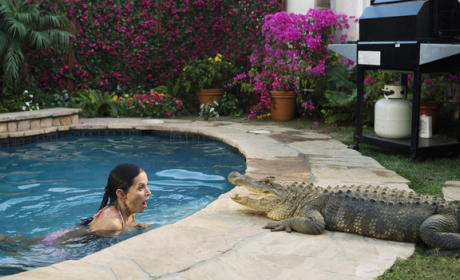 Jules and the Alligator