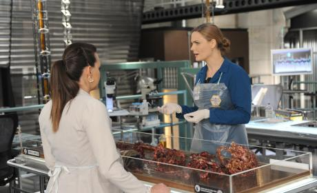 Brennan and Daisy Take a Closer Look at the Remains - Bones Season 10 Episode 8